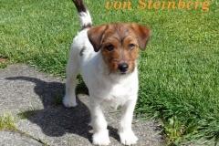 Winny-Viola-von-Steinberg