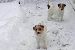 Tiffany-u-Paloma-im-Schnee