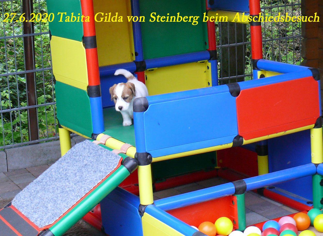 von Steinberg Jack Russell Terrier